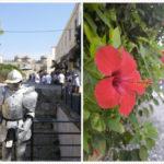 <span>Rhodes</span> La cité médiévale
